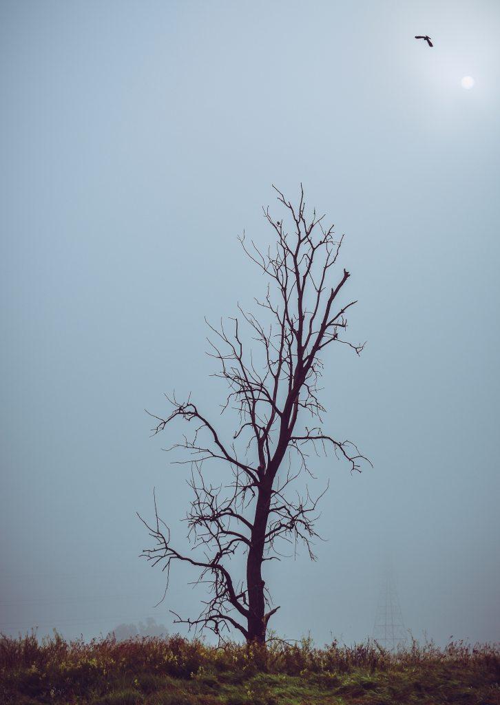 bare-tree-bird-blue-sky-2629019
