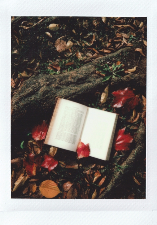 opened-book-on-tree-root-3358707